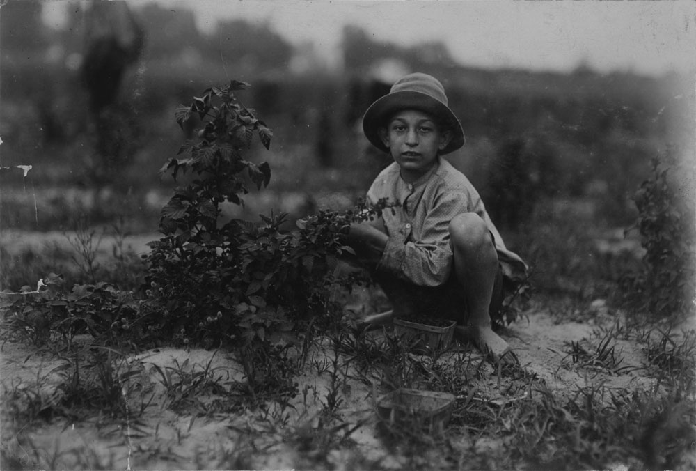 Lewis Hine, Norris Lovitt. Been picking for 3 years in berry fields near Baltimore.