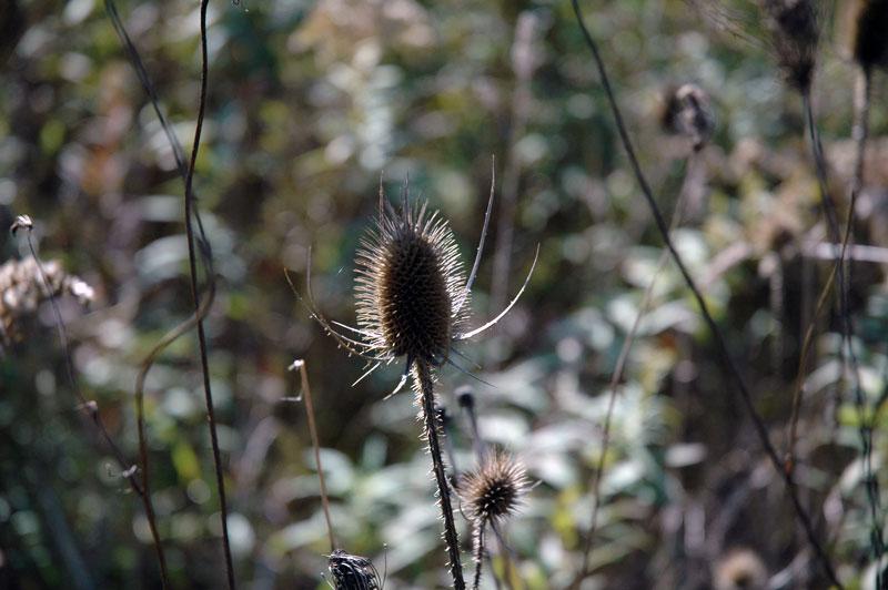 Biological Reserve Image 5