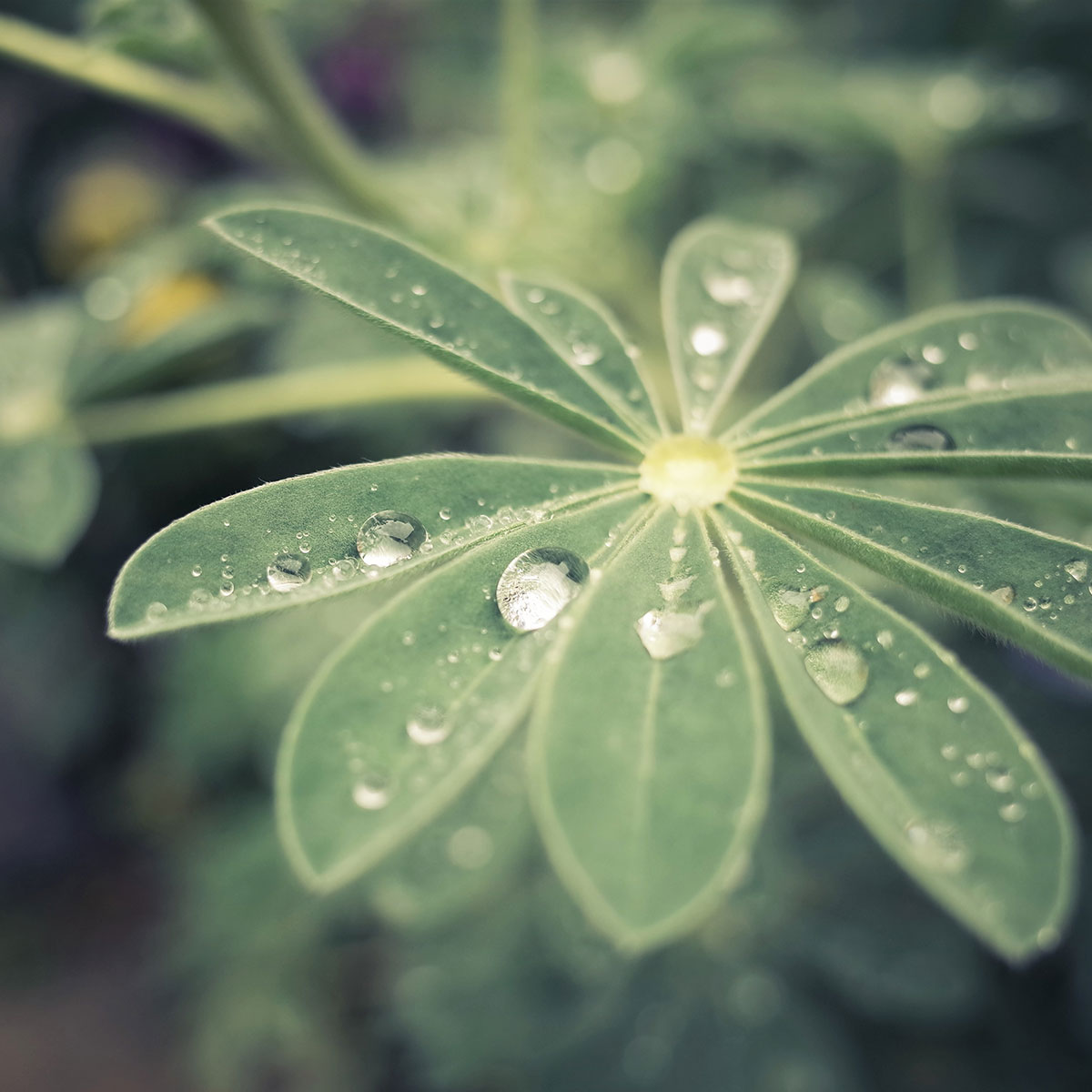 water droplets on plant