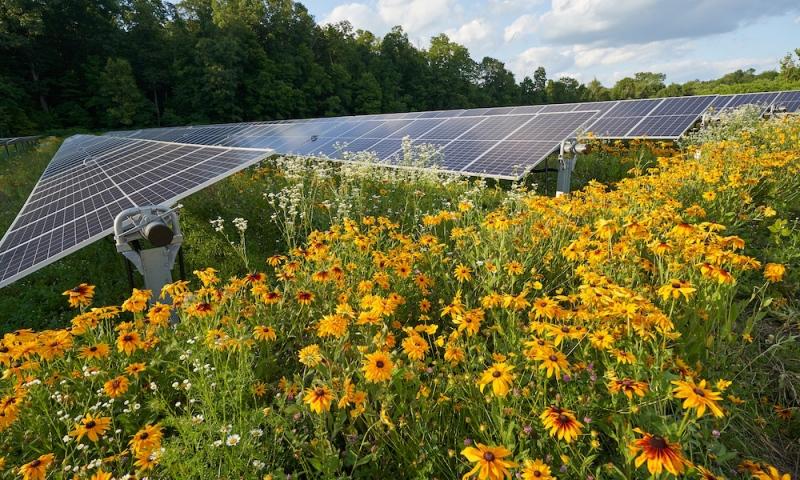 The pollinator habitat at Denison University's solar array