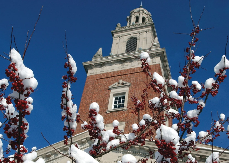 Berries covered in snow in front of swasey