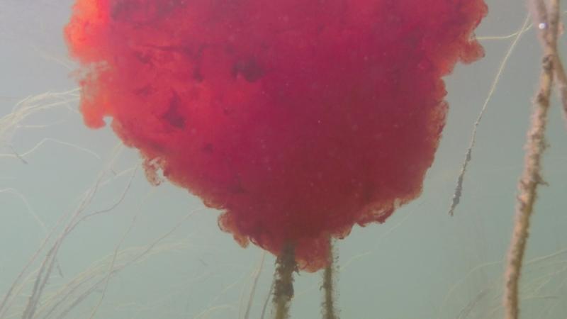 studio art blood cloud