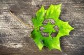 recycling leaf