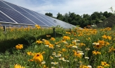 Solar panel in a bed of sunflowers