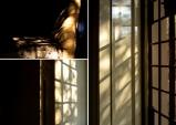 A triptych by Shruti Shankar '21