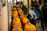 Pumpkin Carving Contest view of all pumpkins