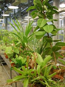 Biology Greenhouse
