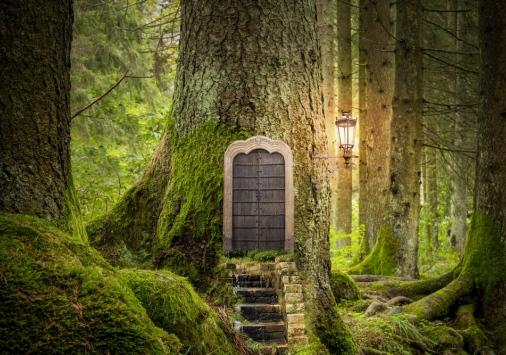 door on tree in forest