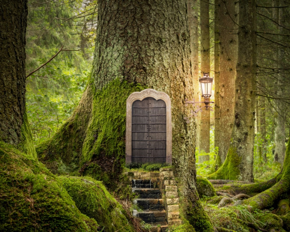 door on tree in forest