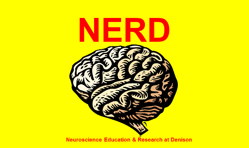 Neuroscience Education and Research at Denison Poster