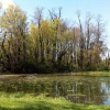 Ebaugh Pond Image
