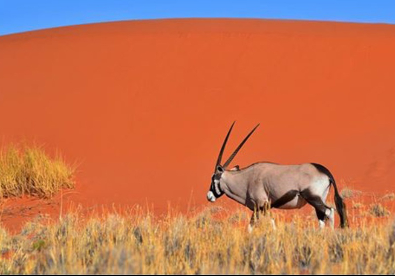wehman '17 red sand dune in Namibia